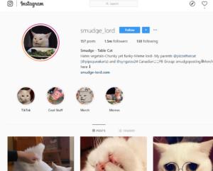 instagram dari kucing
